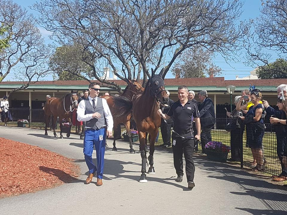 The Queen enters: Winx in the pre-parade ring with strapper Umut Odemislioglu (right) and track rider Ben Cadden. Photo: Kristen Manning