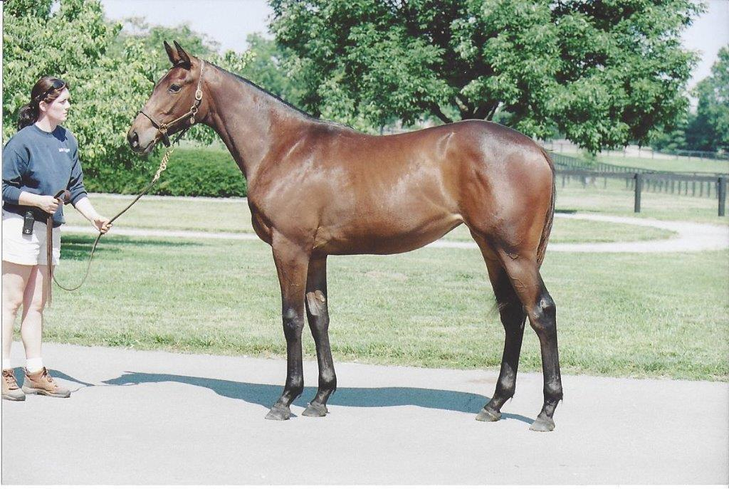 Raised at Mill Ridge: Life Is Sweet, a full sister to Sweet Catomine, won the BC Distaff in 2009. Photo: Mill Ridge Farm