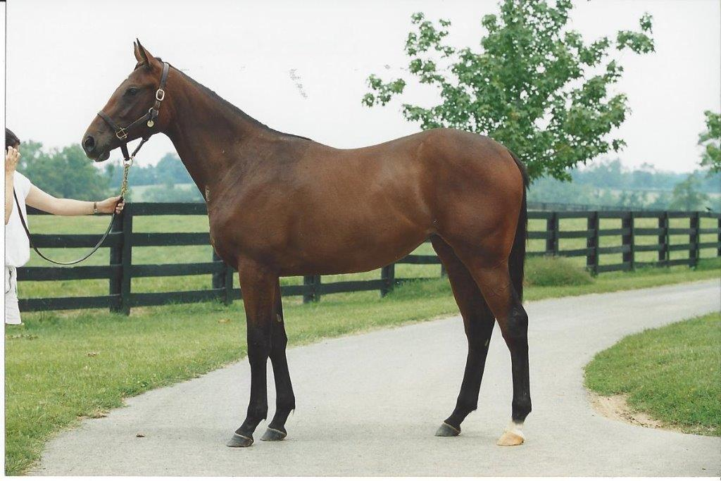 Raised at Mill Ridge: Sweet Catomine (Storm Cat - Sweet Life) won the 2004 Breeders' Cup Juvenile Fillies. Photo: Mill Ridge Farm