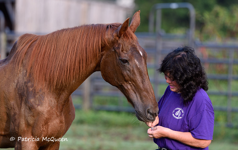 Karen Chillcott with Albany's Secret and the peppermints she can't get enough of. Photo: Patricia McQueen