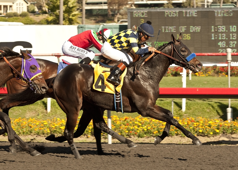 First success: Carving, owned by Bode Miller in partnership with Jill Baffert, wins the Real Quiet Stakes at Hollywood Park in 2012. Benoit photo
