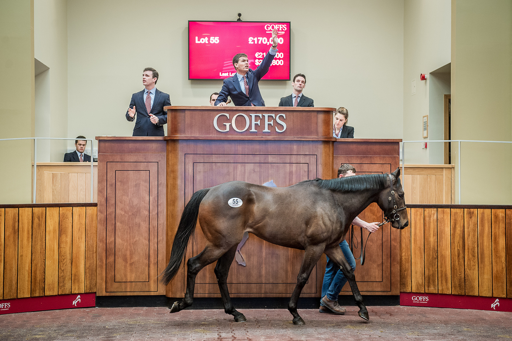 Sale-topper: Ardad goes for £170,000 at the Goffs UK Breeze-Up sale in 2016. Photo: Sarah Farnsworth