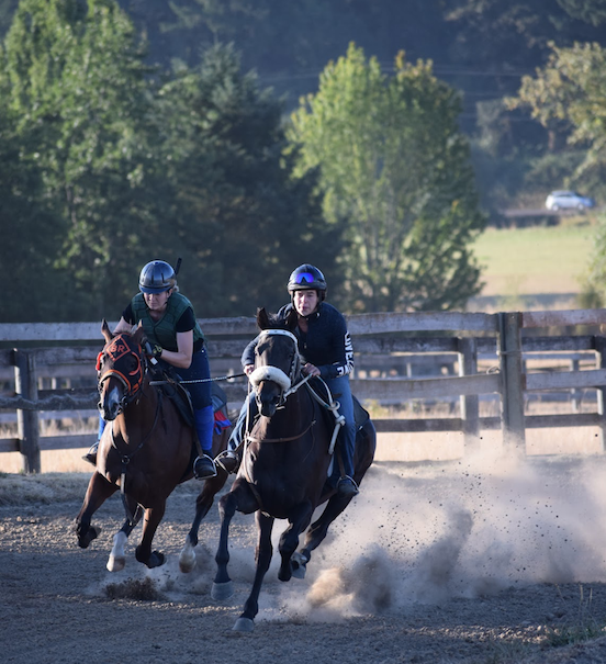 The many features of the redevelopment of Oakhurst Farm included a 4½-furlong training track. Photo: Alicia Hudson