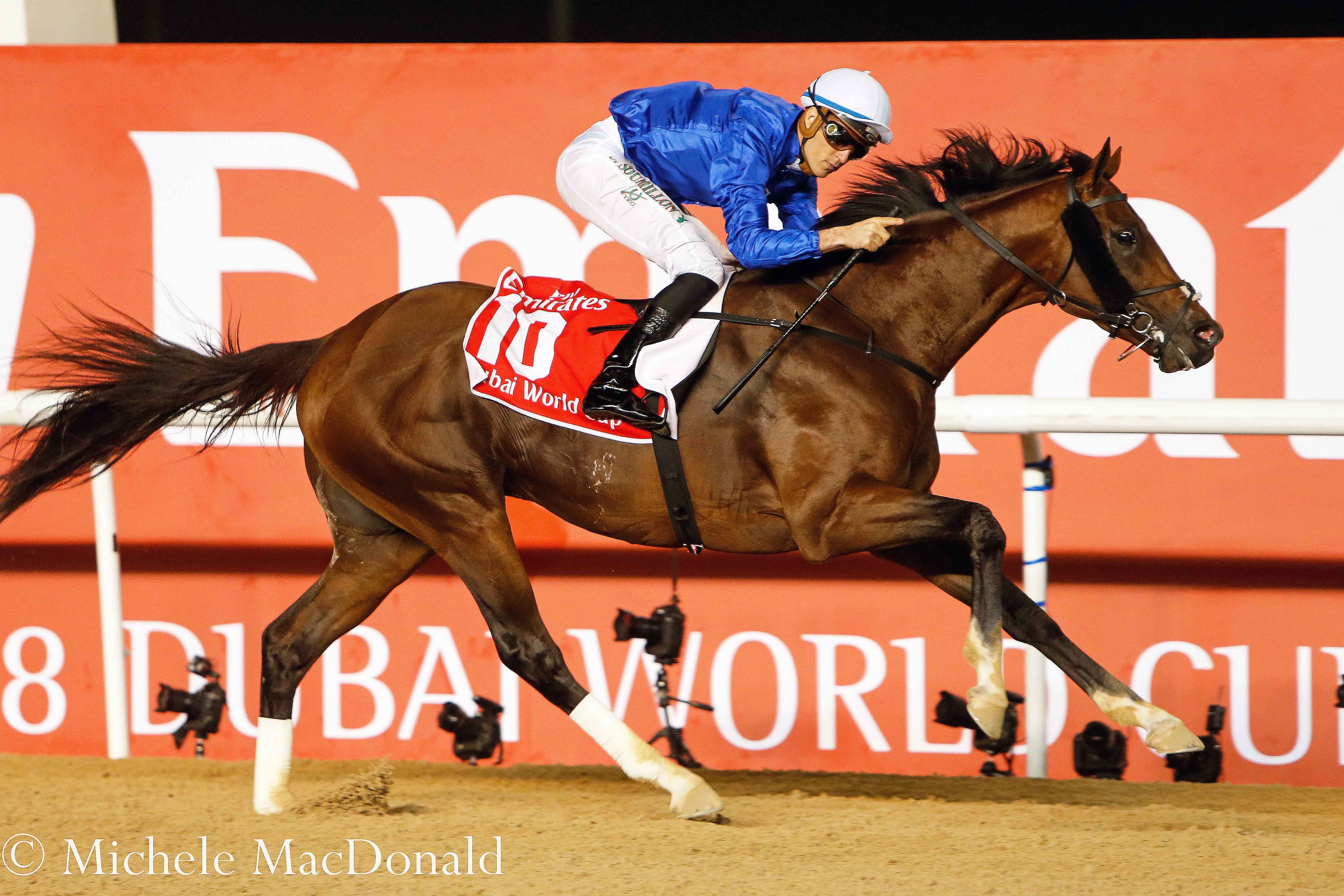 Thunder Snow comes home unchallenged in the Dubai World Cup on the Meydan dirt. He has already won two G1s on turf (including one on very soft ground). Photo: Michele MacDonald