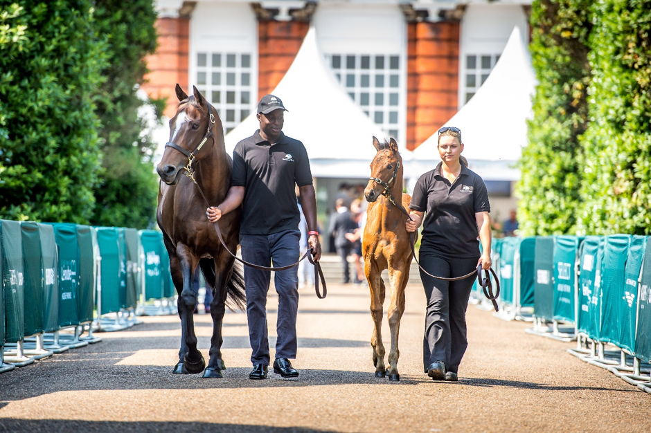 Most of the horses-in-training up for sale at the QIPCO Goffs London Sale, staged on the eve of Royal Ascot, hold entries at the royal meeting later in the week. Photo: Sarah Farnsworth