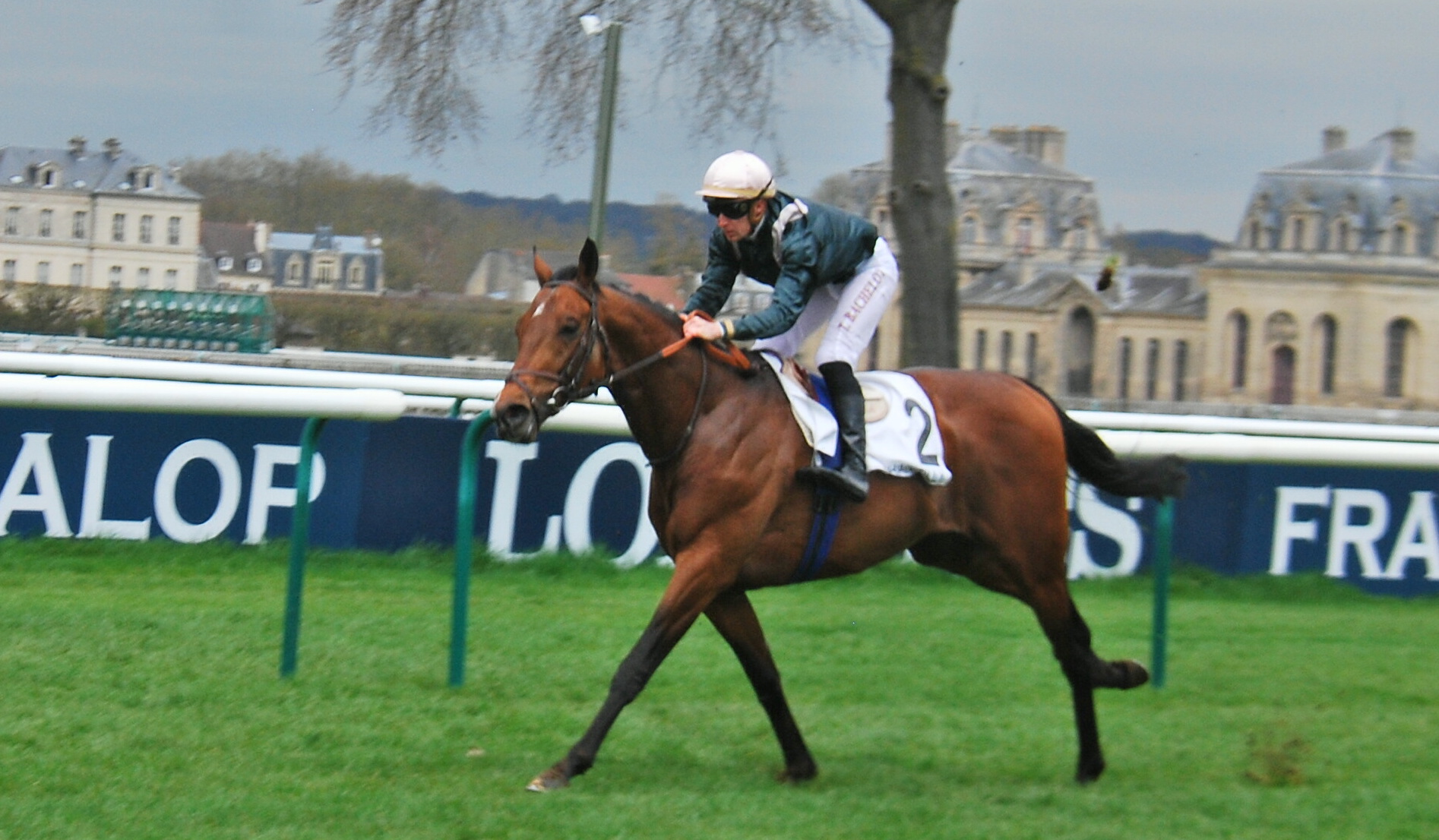 Naturally High: owner Jean-Louis Bouchard is hopeful the son of Camelot can give him a fifth win in the Prix du Jockey Club. Photo: John Gilmore