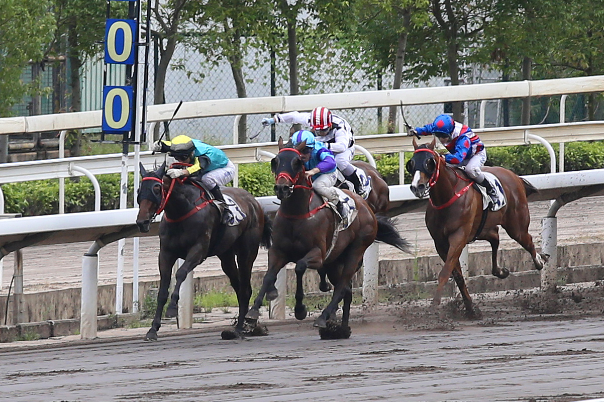Zac Purton matches Moreira's four-timer with this victory on the Sha Tin dirt on Patch Baby (purple) in the second-last race on yesterday's card. Photo: Hong Kong Jockey Club
