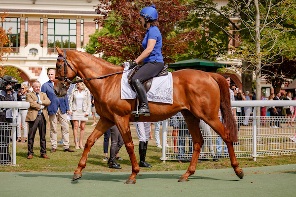 Prince Bishop, winner of the 2015 Dubai World Cup, on parade at Deauville last year