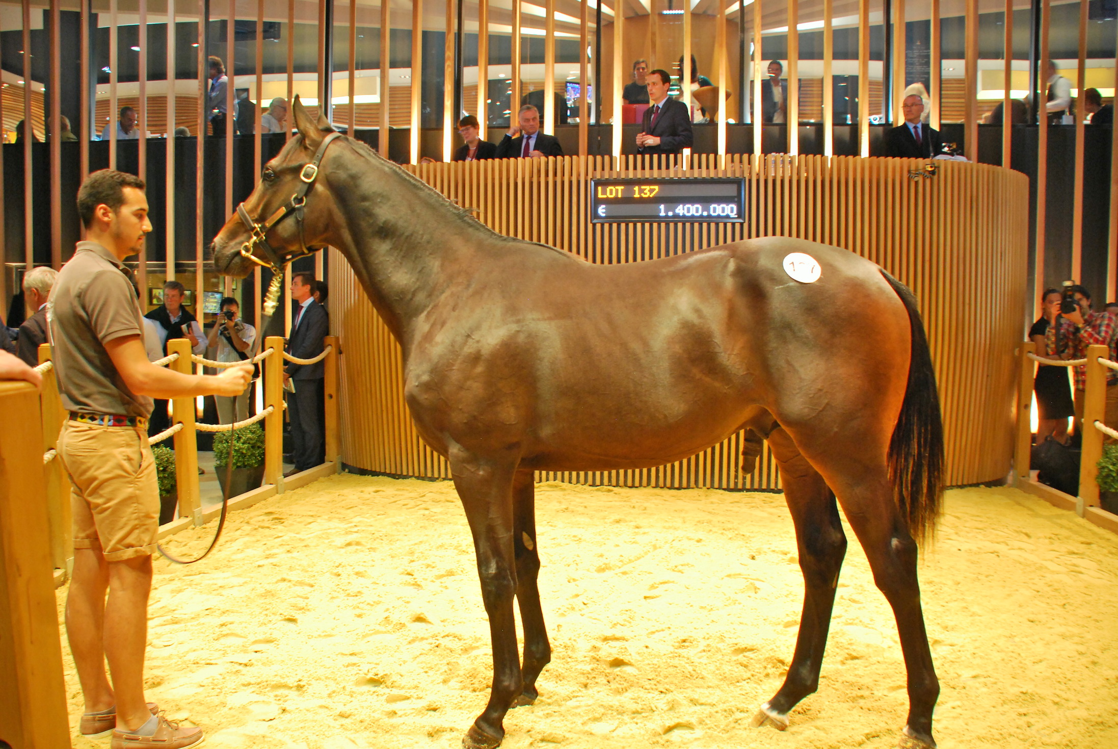Top lot: at €1.4 million, this Dubawi colt out of Just The Judge was the most expensive  yearling at the sale. He was sold to Ballylinch Stud. Photo: John Gilmore