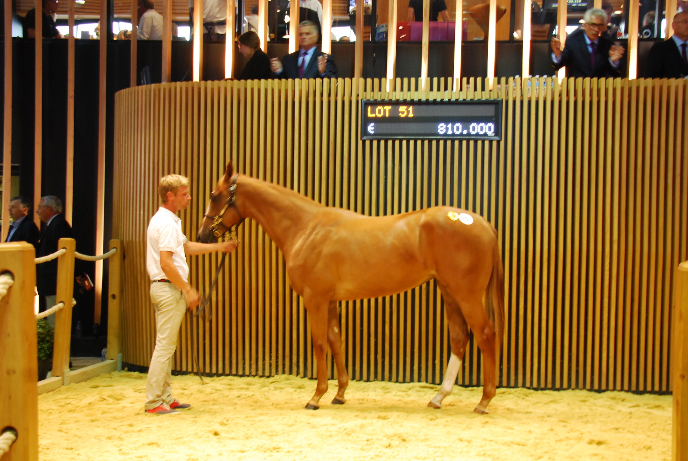 Justin Casse paid €810,000 for this Galileo filly out of Tender Morn, the highest priced yearling on the first day of the  Arqana sale. Photo: John Gilmore