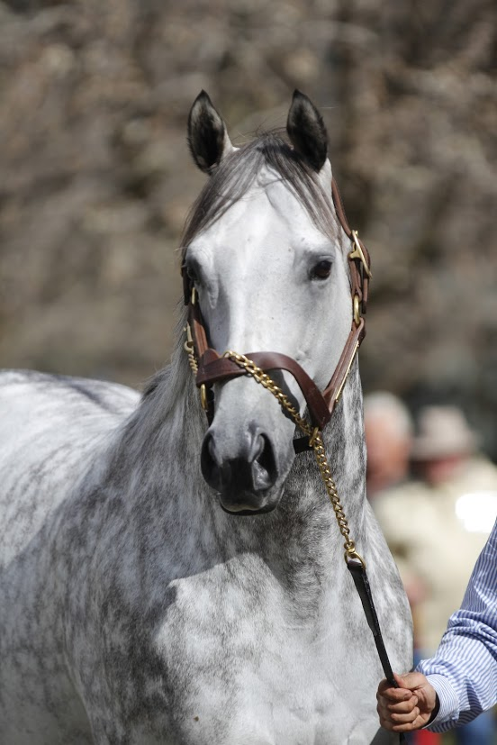 Frosted: Darley's the multiple G1 winner is the only son of Tapit at stud in Australia