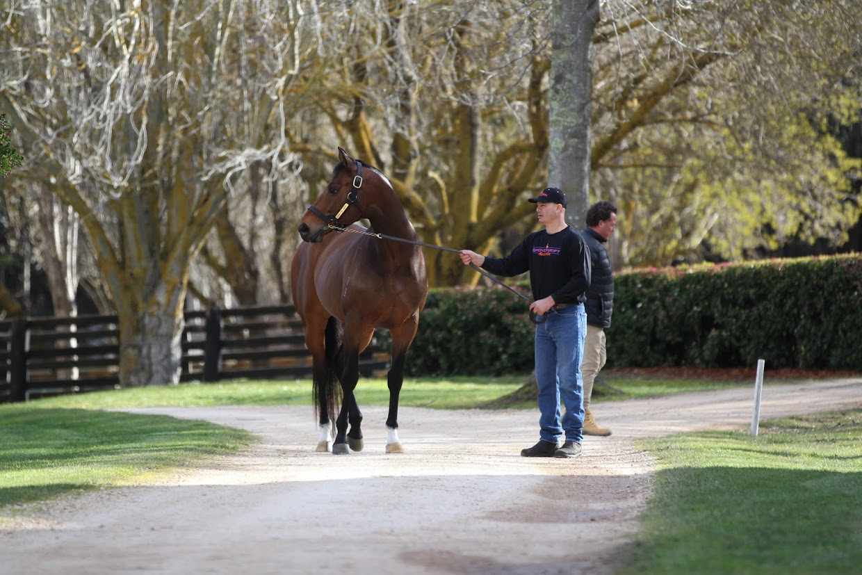 Hampton Court: the G1 winner attracted plenty of attention at the Spendthrift Australia stallion parade. His first crop have just turned two