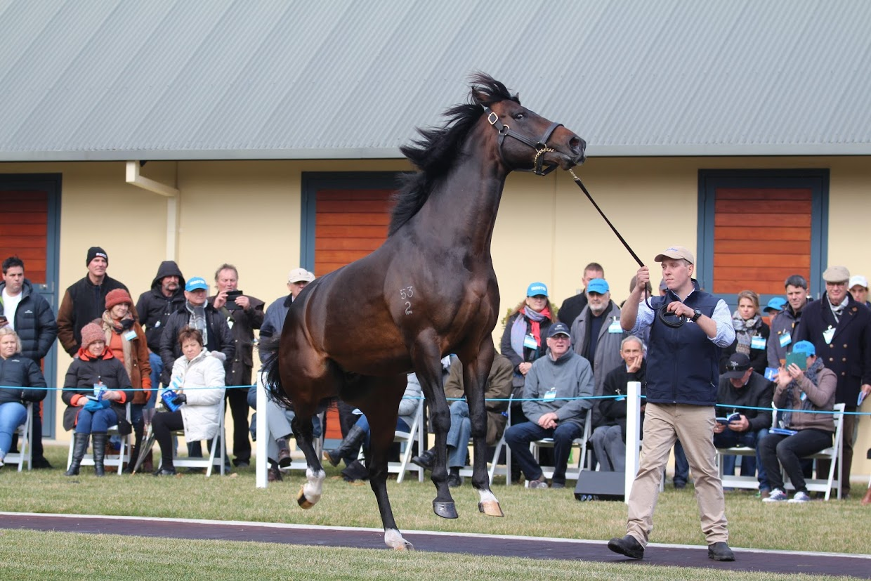 "Holler: a few high spirits from Darley Victoria's ""best-value stallion"", according to general manager, Andy Makiv"