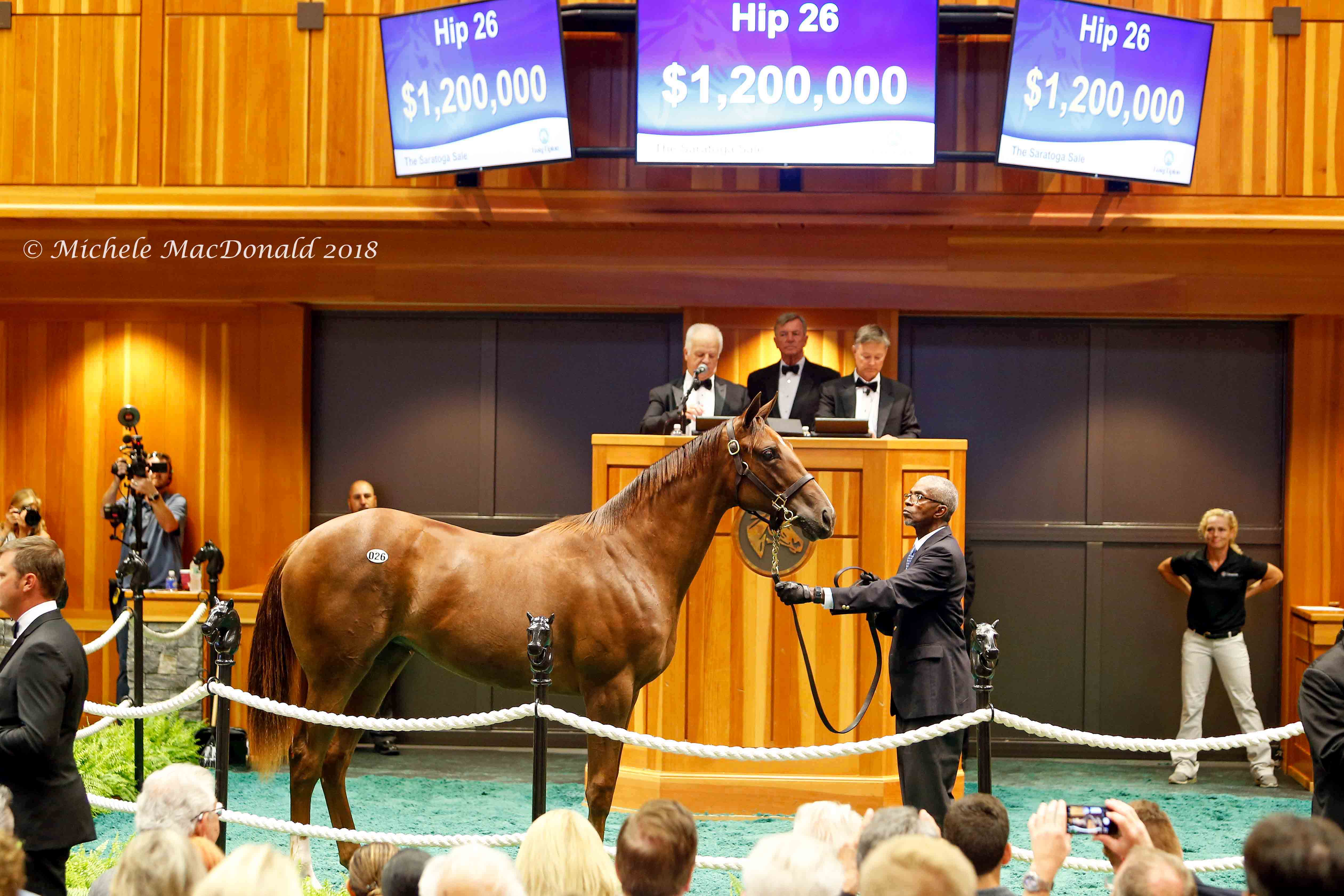 This American Pharoah filly out of Life At Ten was bought by Gainesway's Brian Graves as a weanling last November. She is pictured being resold for $1.2 million at the Fasig-Tipton Saratoga sale in August. Photo: Michele MacDonald