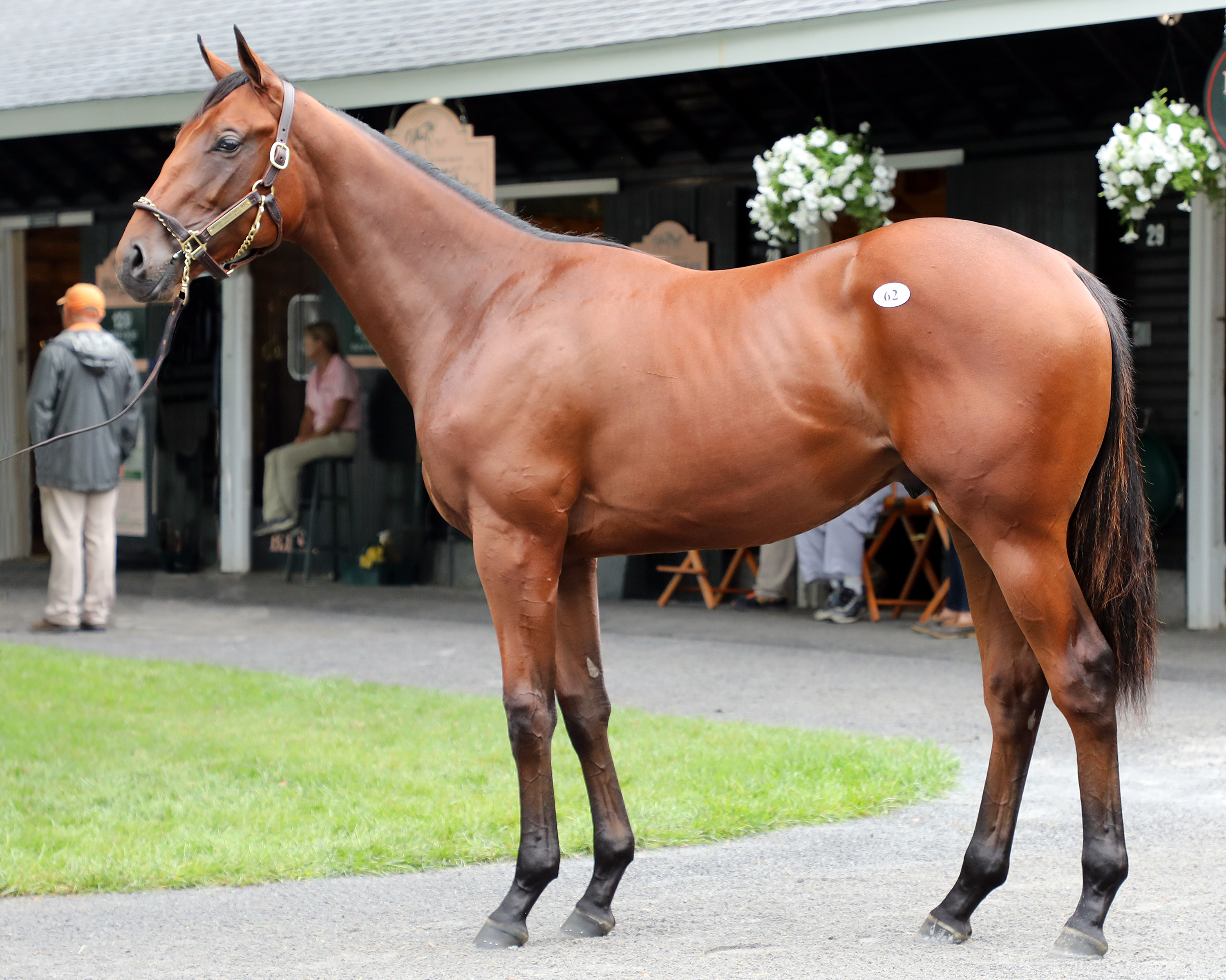 Bob Baffert signed for $1 million on behalf of M.V. Magnier for this colt out of Party Silks at the Fasig-Tipton Saratoga sale in August. Photo: Fasig-Tipton