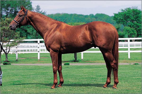 Big in Japan: Chief Bearheart stood at stud in Japan from 1999 until  his death in 2012