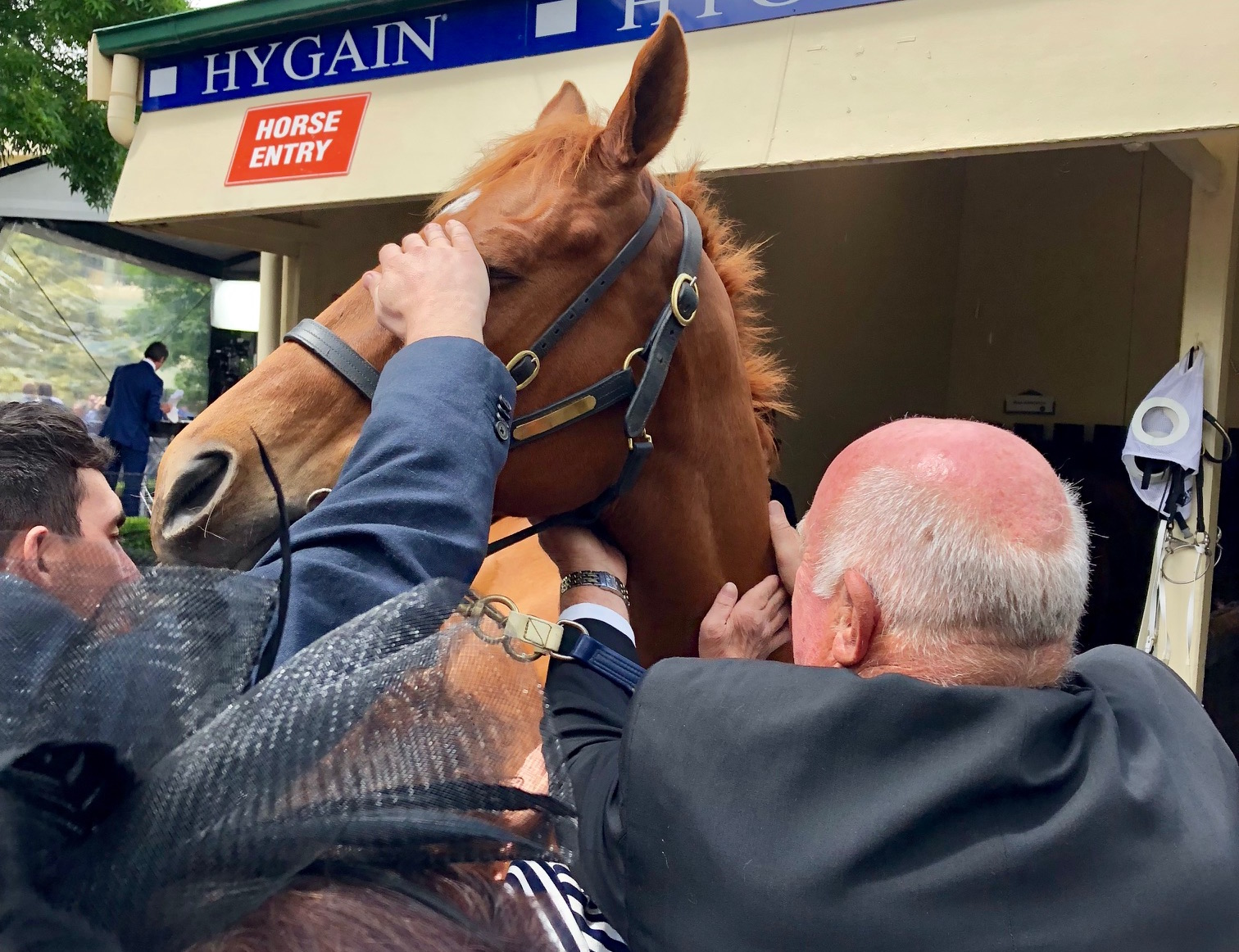 Basking in the attention: retired five-time Cox Plate contender Happy Trails. Photo: Amanda Duckworth