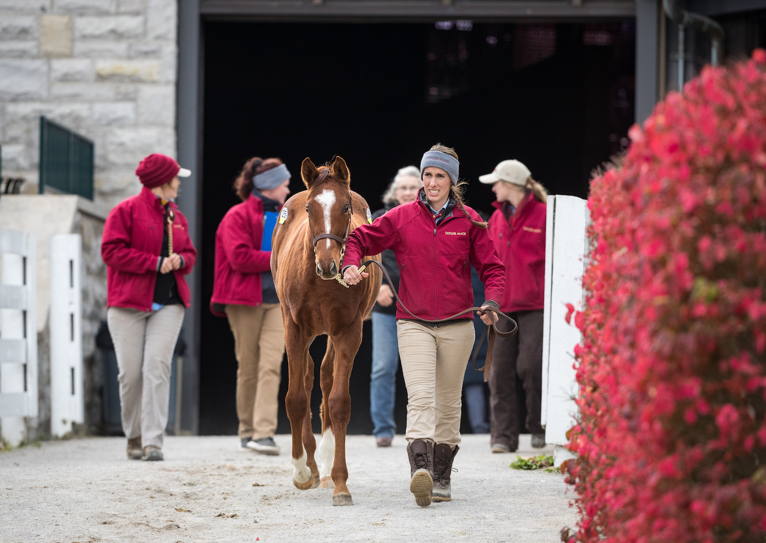 "Taylor Made at Keeneland: ""Overall, we have a really great team,"" says Mark Taylor. ""That's given us the flexibility to take the next step."" Photo: Equi Sport"