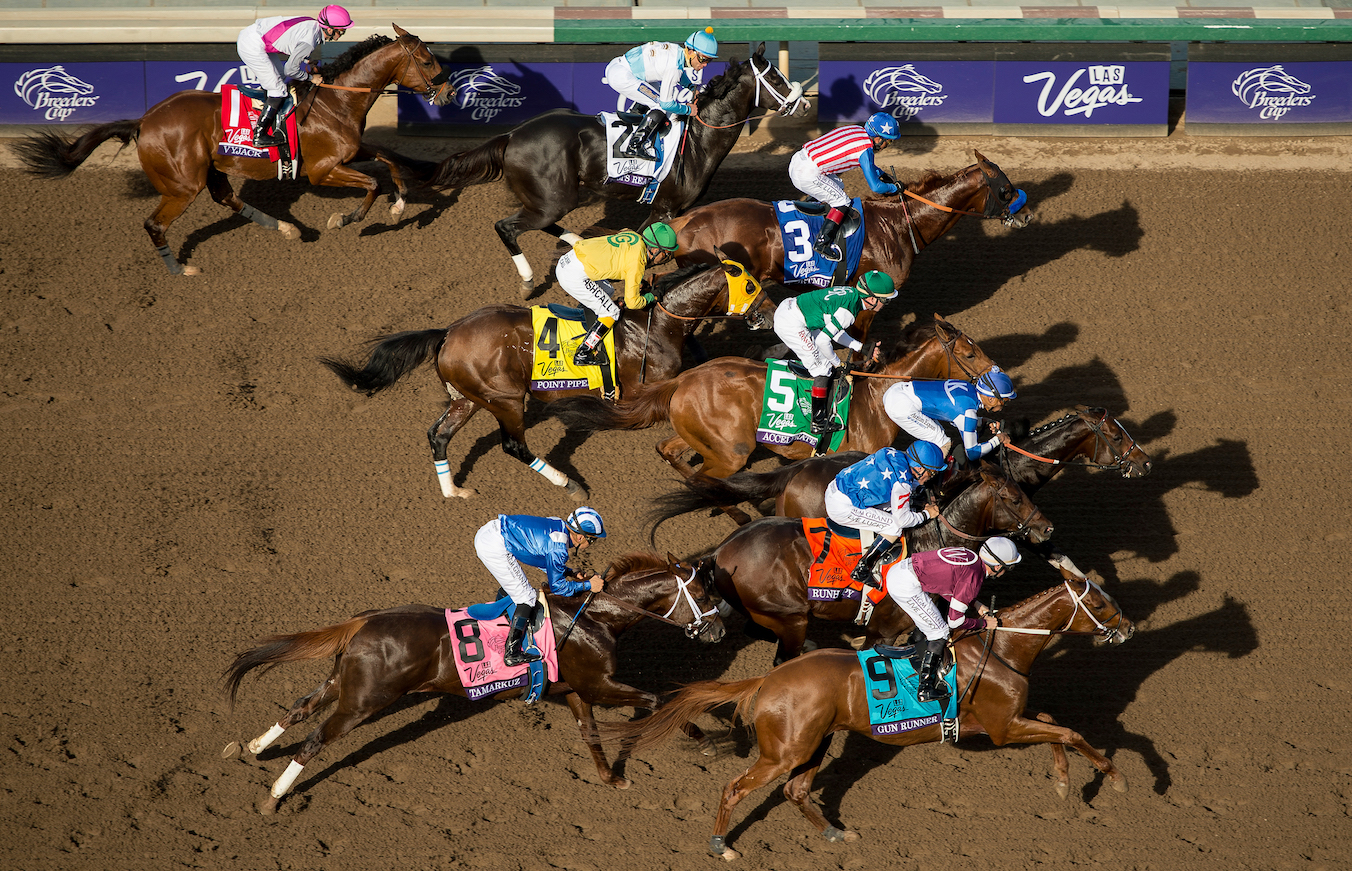 Perfect lighting: Whitaker was on the roof of the stand for this shot 50 yards after the start of the nine-runner Breeders' Cup Dirt Mile at Santa Anita in 2016. The winner was Tamarkuz (8), ahead of the following year's Breeders' Cup Classic hero Gun Runner (9). The race also featured this year's BC Classic winner, Accelerate (5), who was third