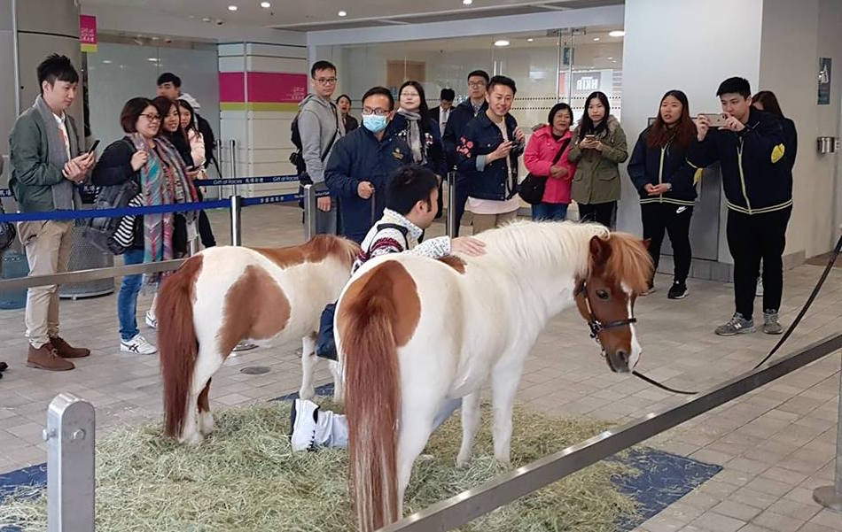 Even the grown-ups love having their pictures taken with the small ponies at Sha Tin. Photo: Kristen Manning
