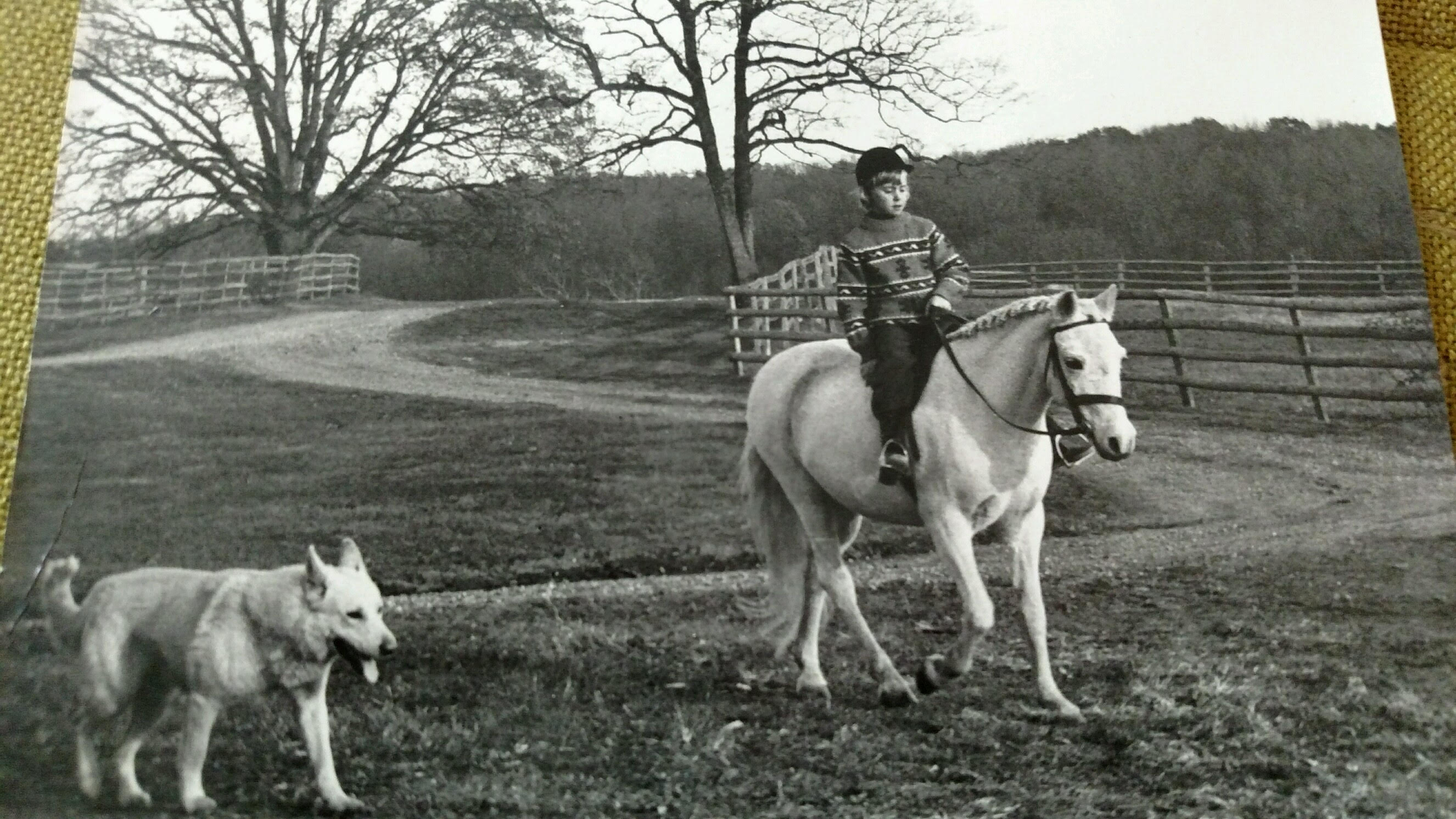 Jill Byrne grew up around surrounded by impressive equines, and soon became 'addicted to horses'