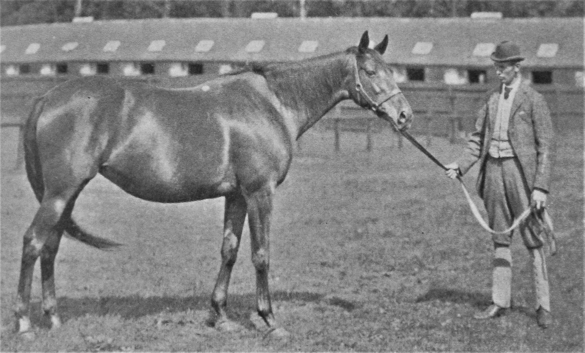 Busybody: Meddler's dam won both the 1000 Guineas and the Oaks in 1884