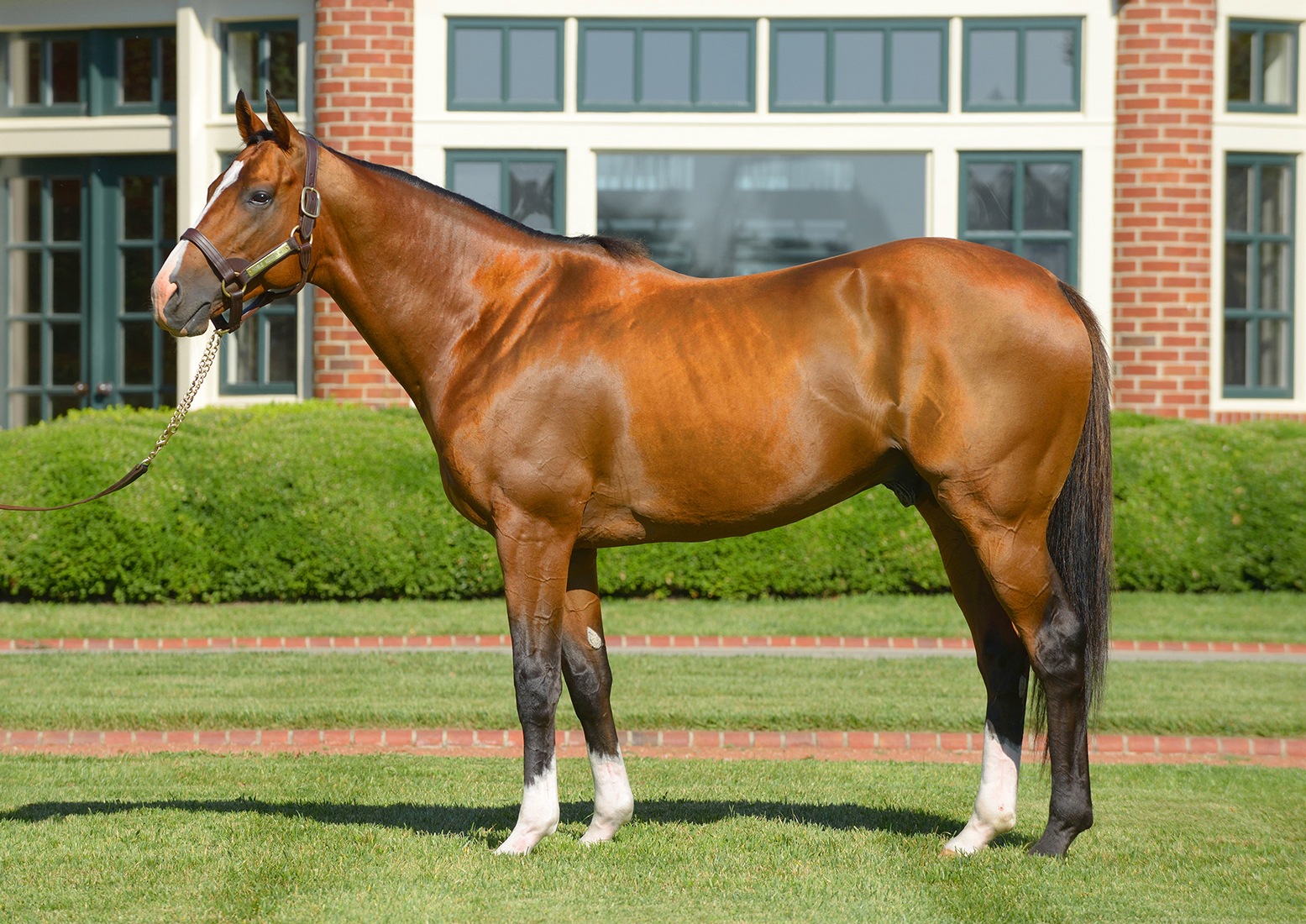 "Noble Mission: ""I think Dad has always really wanted a top son of Galileo,"" says Bill Farish. Photo: Lane's End Farm"