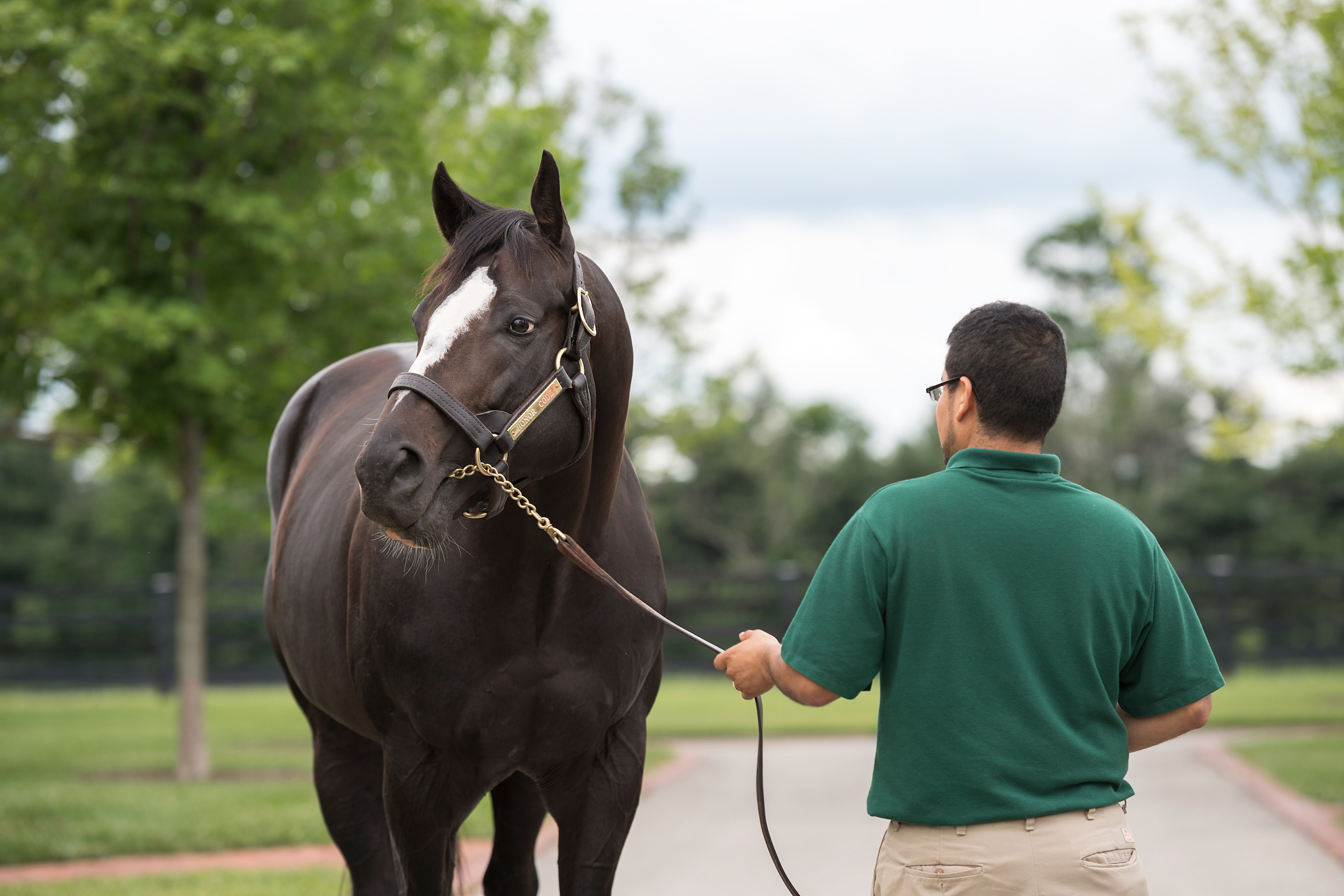 "Honor Code: ""He was always such an eye-pleaser and still is,"" says Farish. Photo: Lane's End Farm"