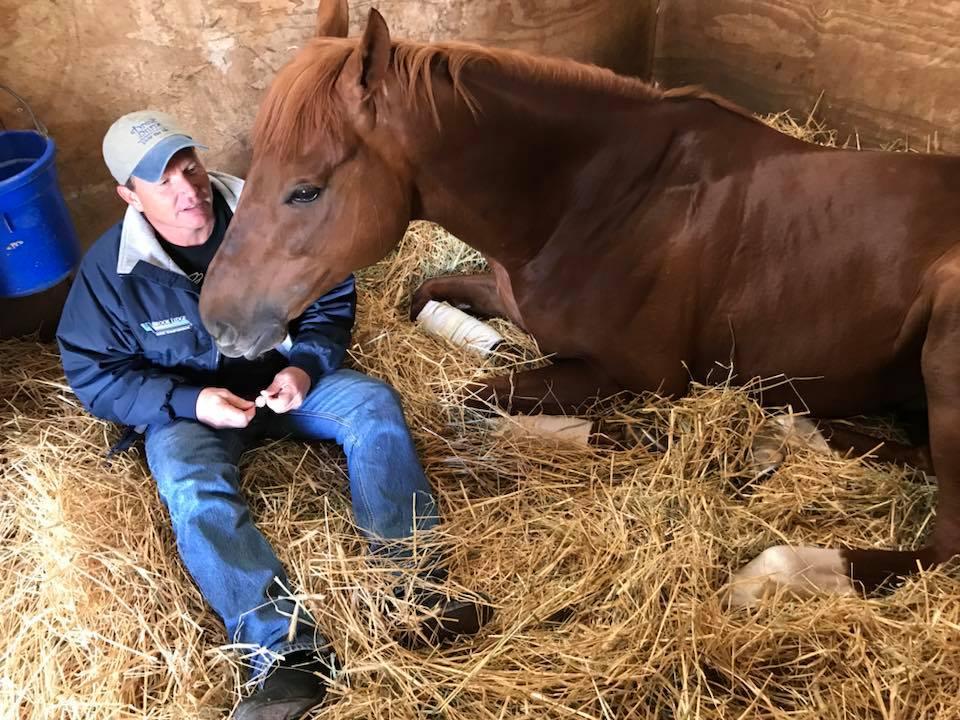 Meet Angus The Horse Who Sits Like A Dog Has A
