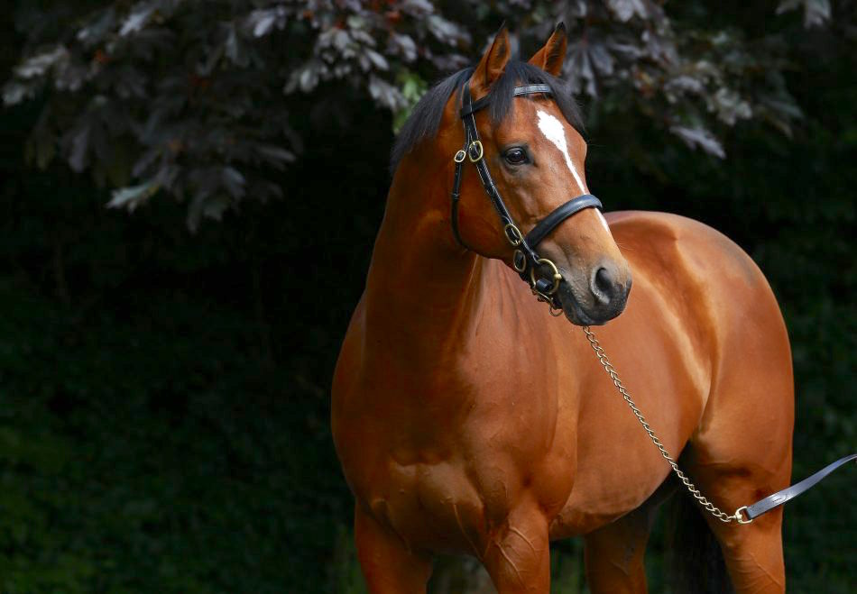 Many experts believe the 2015 2000 Guineas winner Gleneagles will end 2019 as champion first season sire. Photo: Coolmore.com
