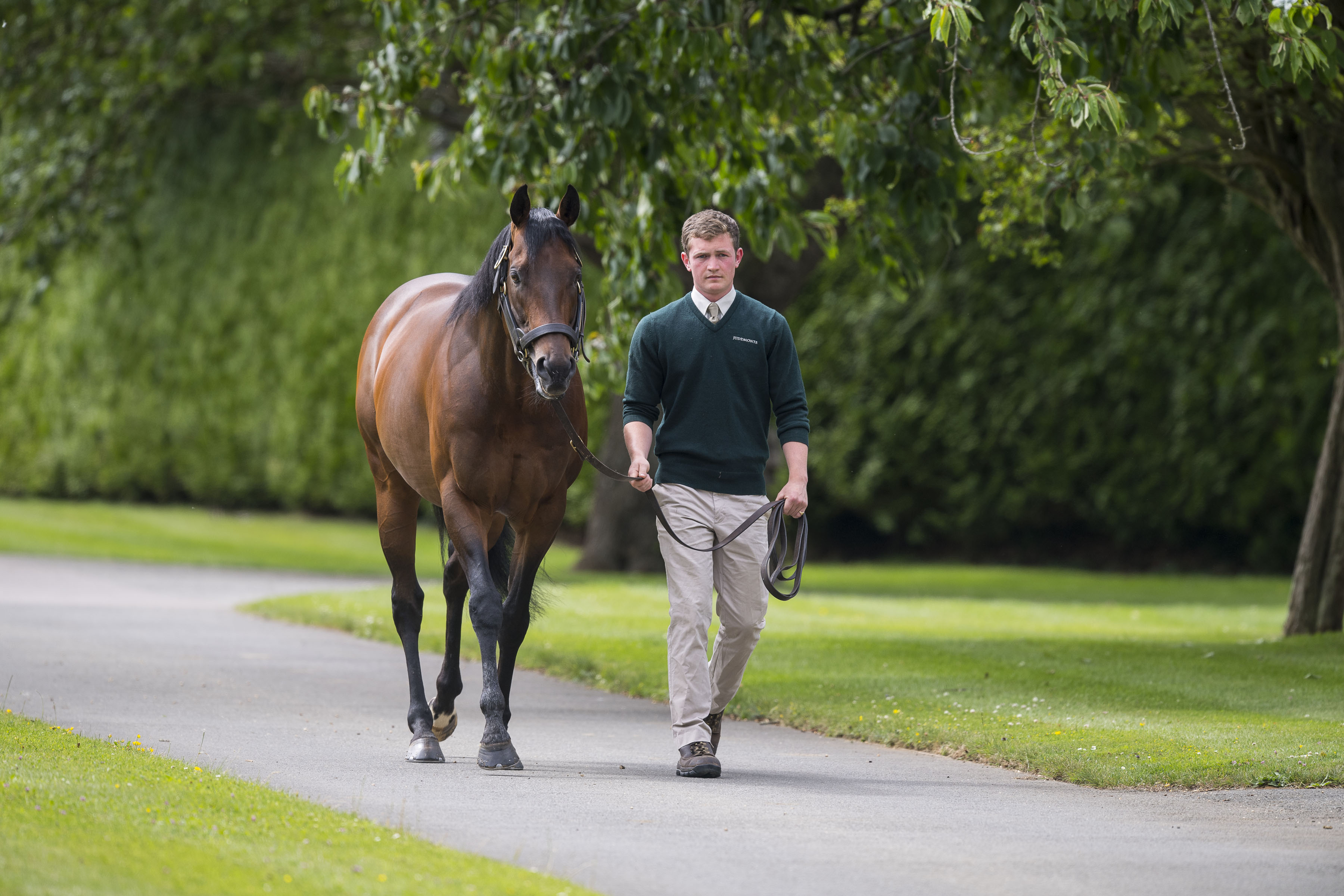 Kingman, one of the most exciting recent additions to Britain's stallion ranks, has two progeny on offer at the sale. Photo: Bronwen Healy/Juddmonte Farms