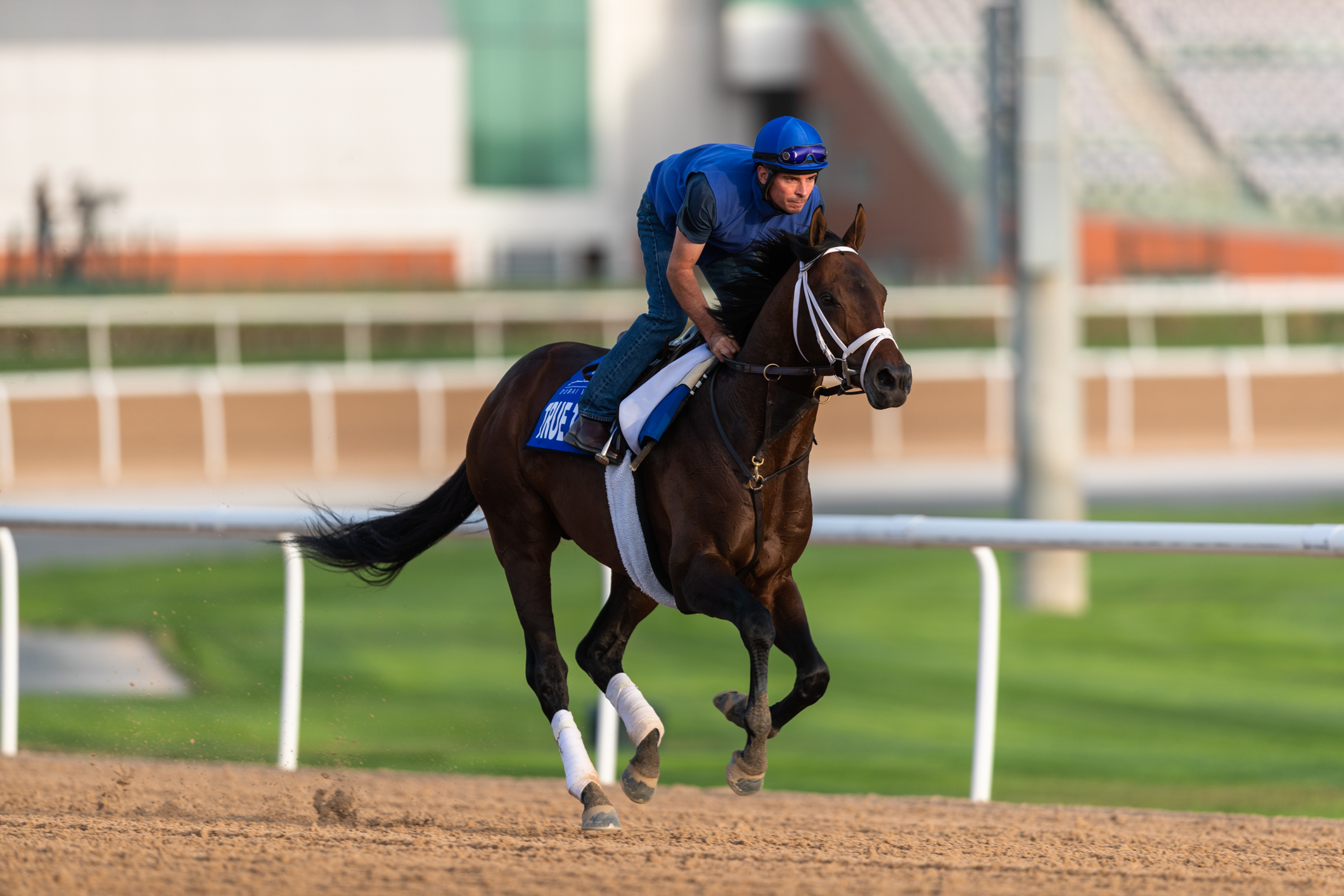 "True Timber exercising on the main track at Meydan yesterday (Sunday).  ""He came out of [the Pegasus] in great shape, and we feel like a mile suits him better than a mile and an eighth,"" says McLaughlin. Photo: Neville Hopwood/Dubai Racing Club"