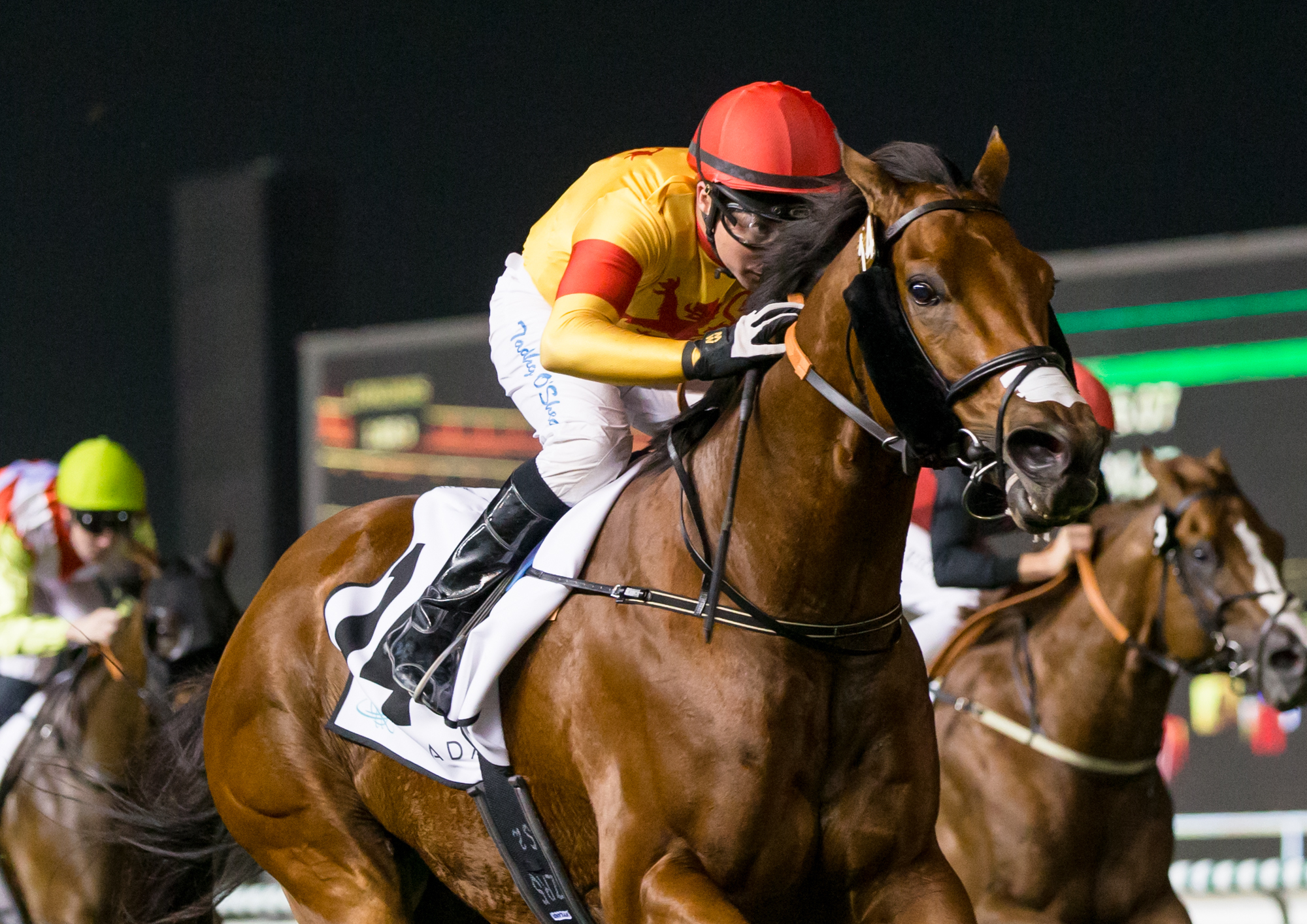 Hot Scot Racing's Riflescope, ridden  by Tadhg O'Shea, winning at Meydan in February. Photo: Dubai Racing Club/Erika Rasmussen