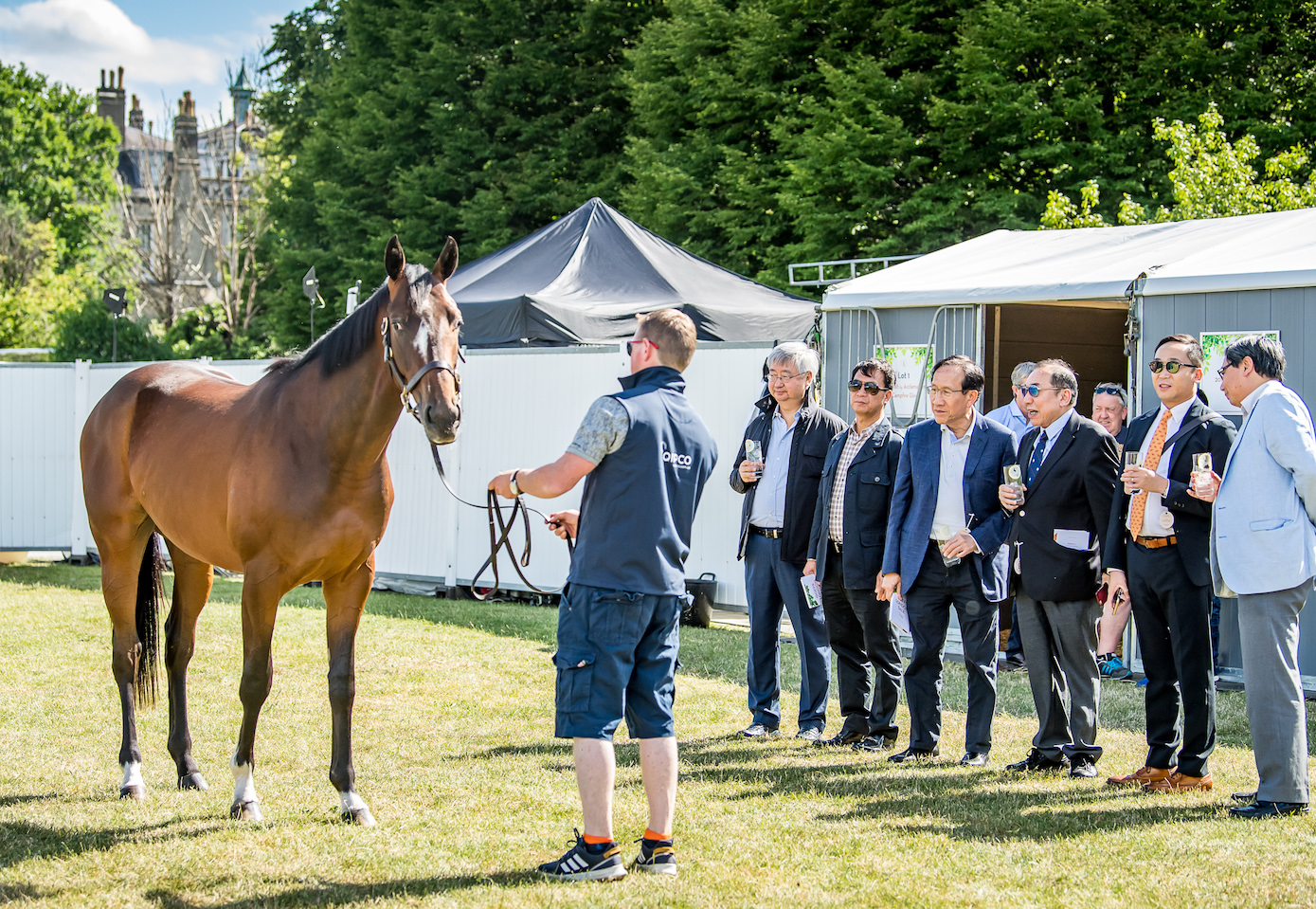 Guests from Hong Kong inspect a mare at last year's sale. Photo: Sarah Farnsworth