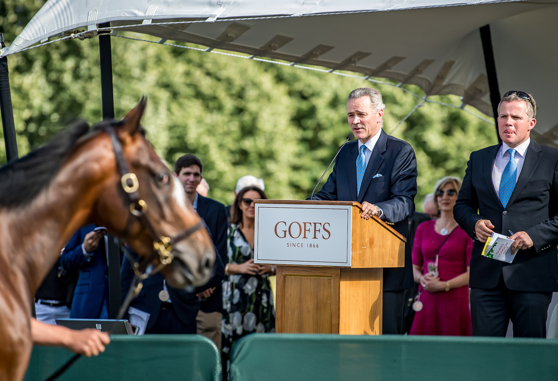 Goffs Group Chief Executive, Henry Beeby, on the rostrum at the 2018 Goffs London Sale. Photo: Sarah Farnsworth