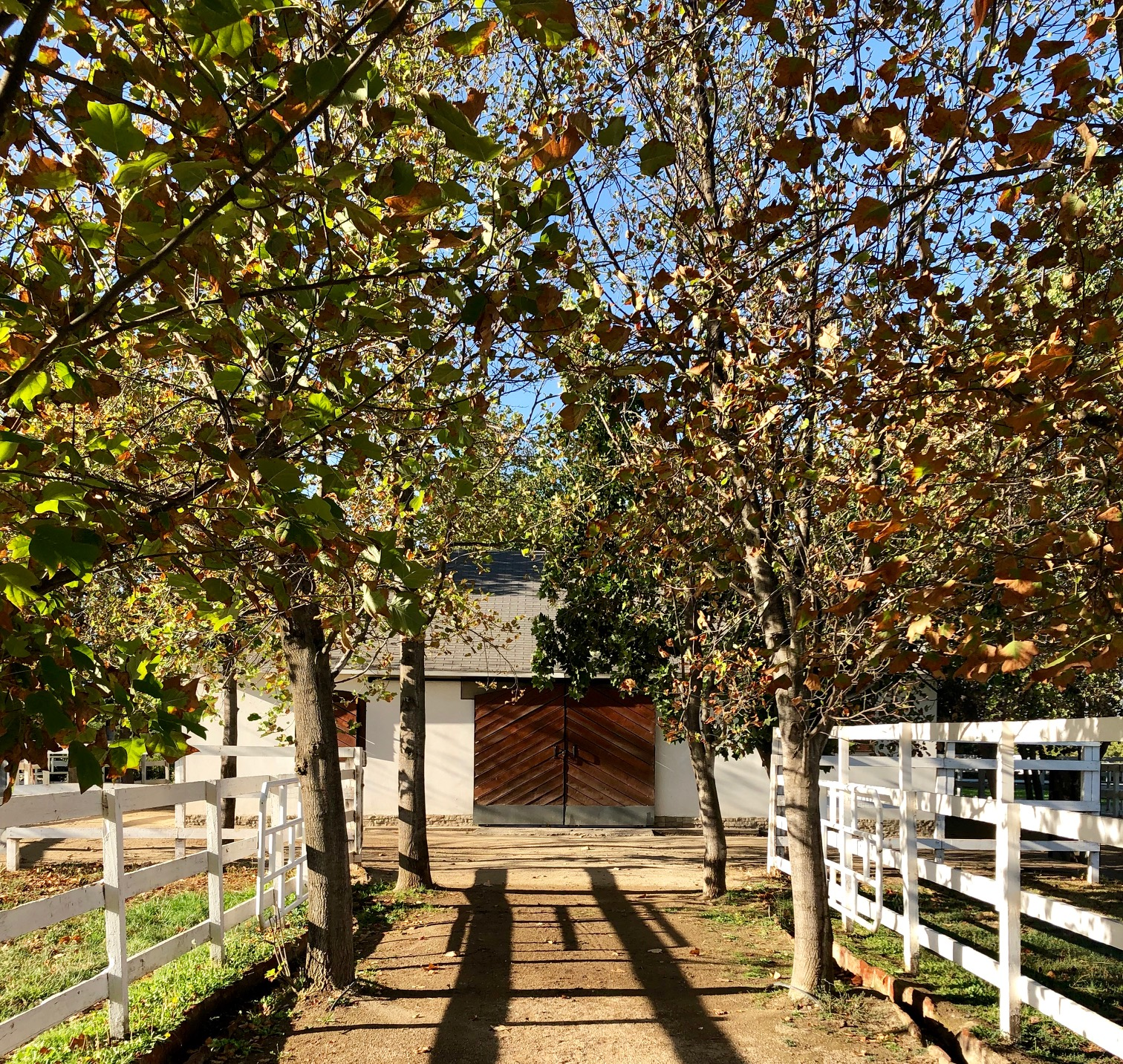 "California Chrome's barn in Chile: ""You could live in his stable,"" says Oussama Aboughazale. Photo: Amanda Duckworth"