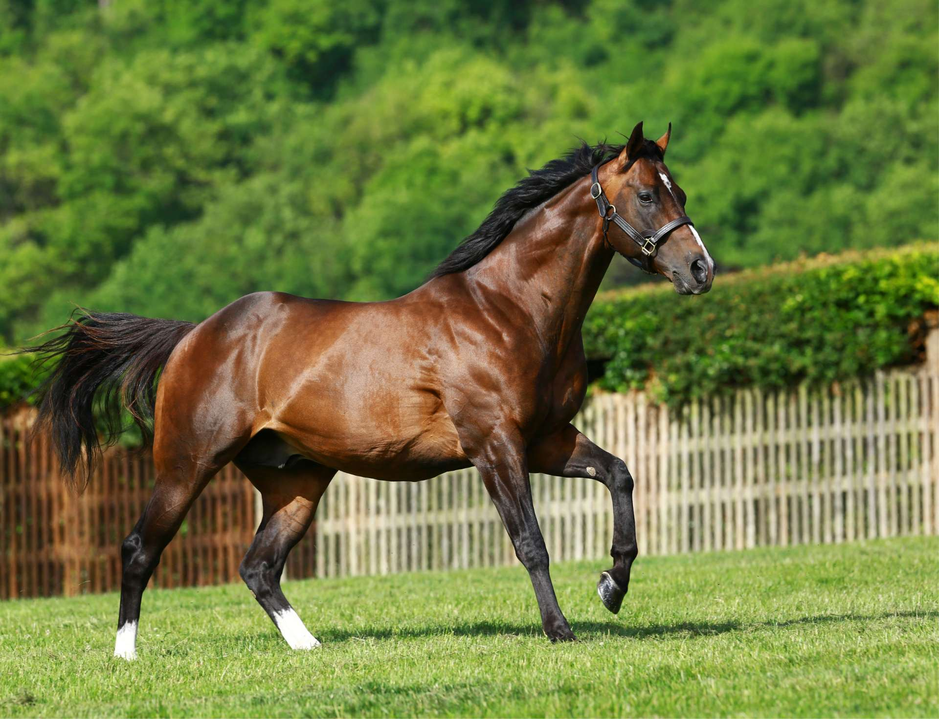 Cable Bay: the new Highclere flagbearer also had more Royal Ascot runners than any other first-season sire. Photo: Highclere Stud