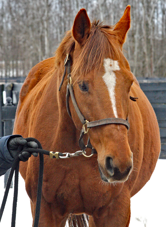 2010 Queen's Plate winner Big Red Mike, probably LongRun's best-known resident, has now been adopted. Photo: Emily Shields