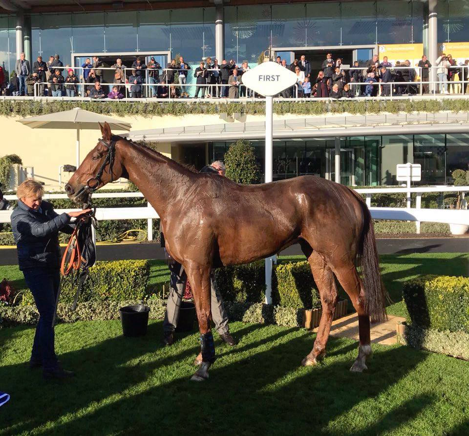 Ascot success: Vosne Romanee in the winner's circle after a big win there last November