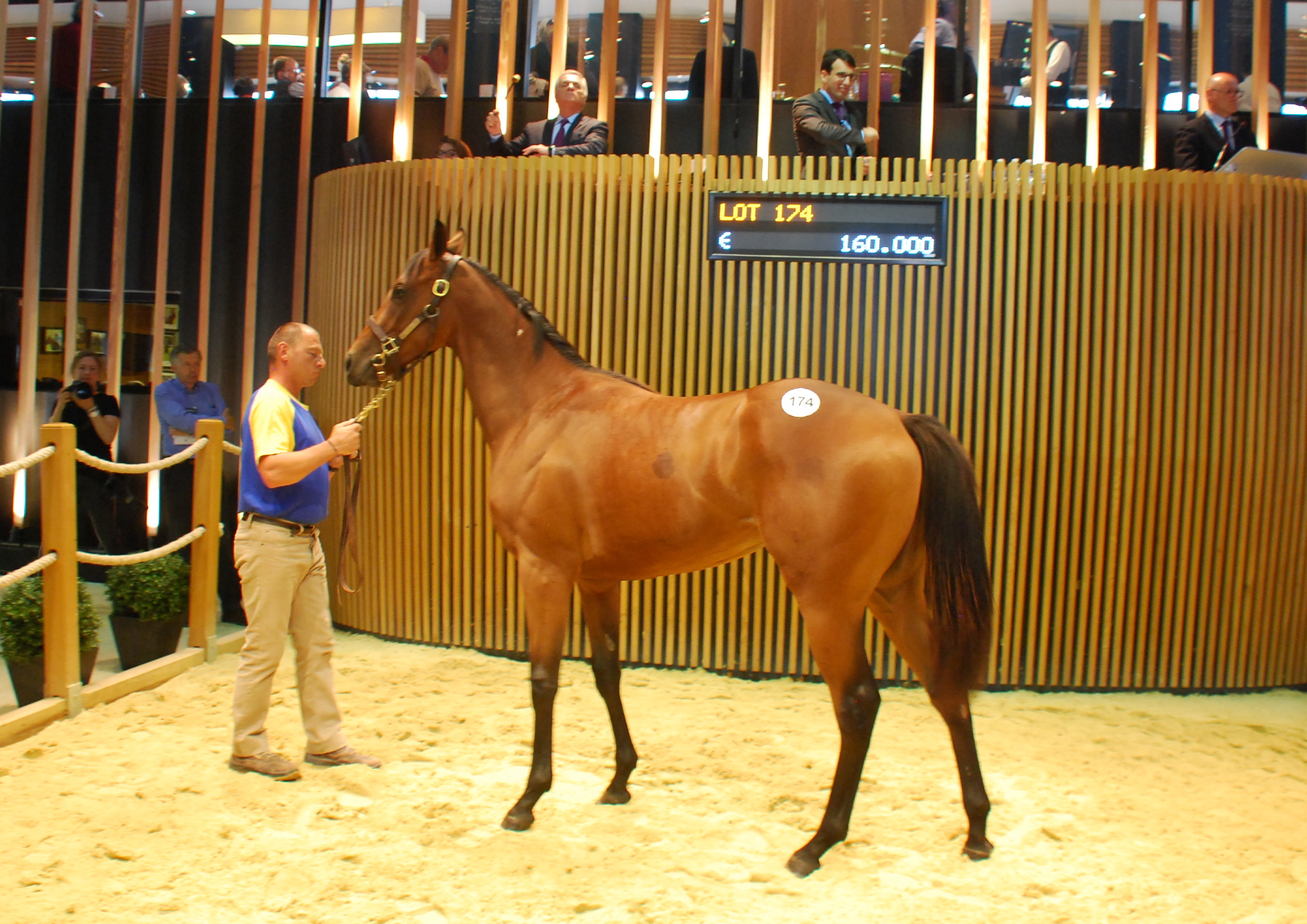 Kenny McPeek paid  €160,000 for this Haras de La Louviere filly by Shalaa out of Serisette. Photo: John Gilmore