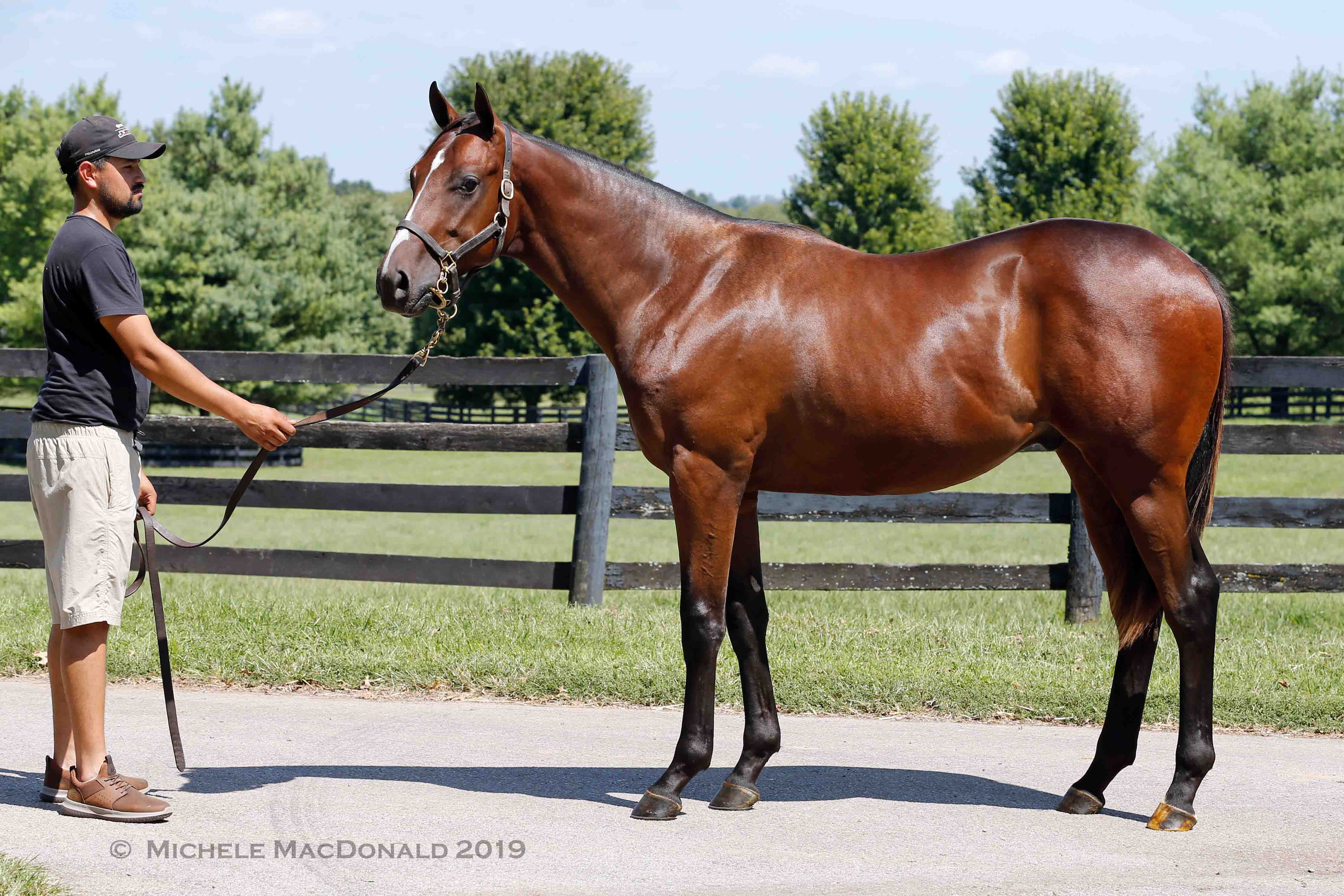 Sale star: this yearling colt is a half-brother to Justify by American Pharoah's sire, and he's up for auction at Keeneland tomorrow (Monday). Photo: Michele MacDonald