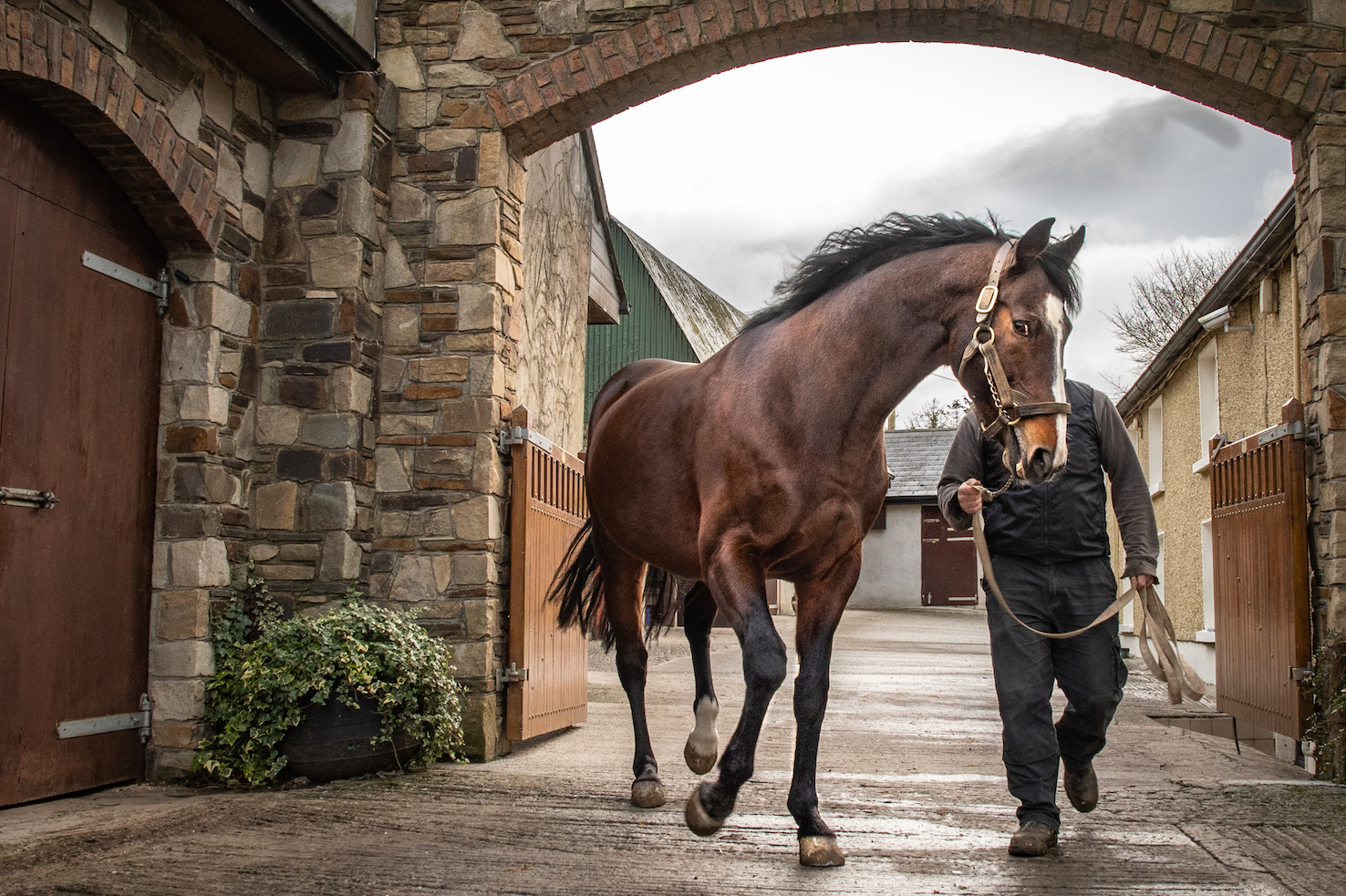 2010 Epsom Derby and Prix de l'Arc de Triomphe winner Workforce stepping out at Knockhouse Stud in County Kilkenny during last January's Stallion Trail. Photo: ITM