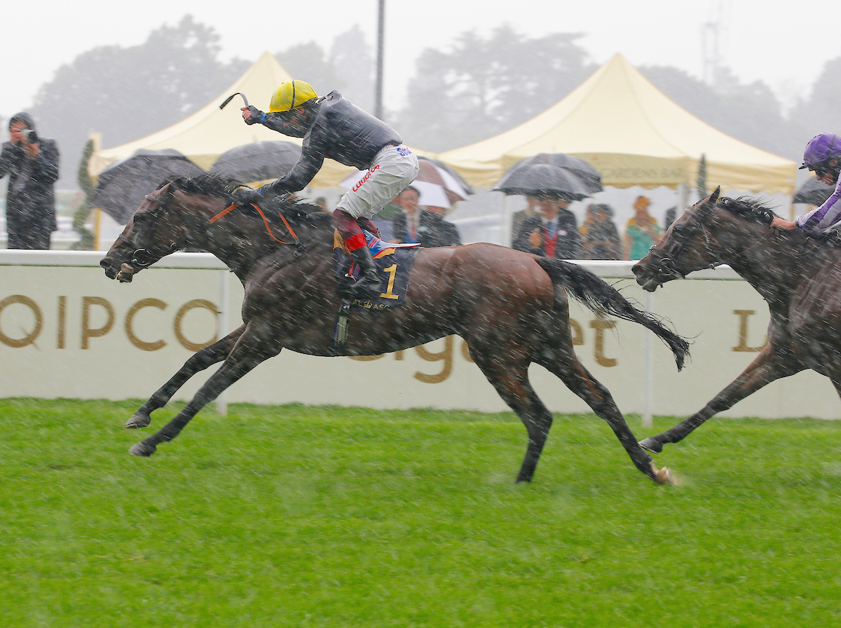 New jumps stallion Crystal Ocean, who visitors will be able to see at Coolmore's Castlehyde Stud, is seen getting the better of Magical in the G1 Prince of Wales's Stakes at Royal Ascot last June. Photo: focusonracing.com