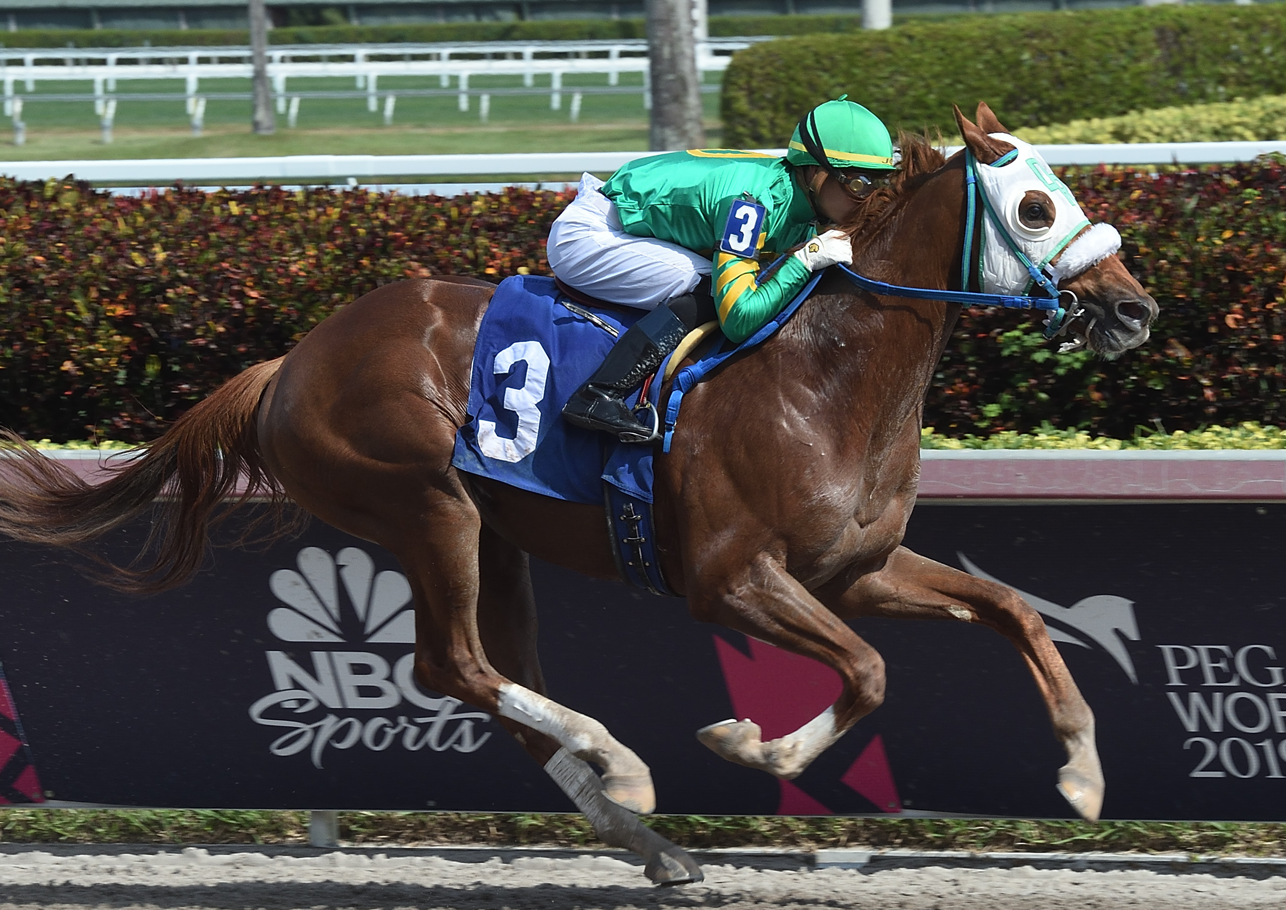 Math Wizard: he will miss the Pegasus World Cup this weekend after a minor setback as the Saudi Cup is the main goal. Photo: Gulfstream Park