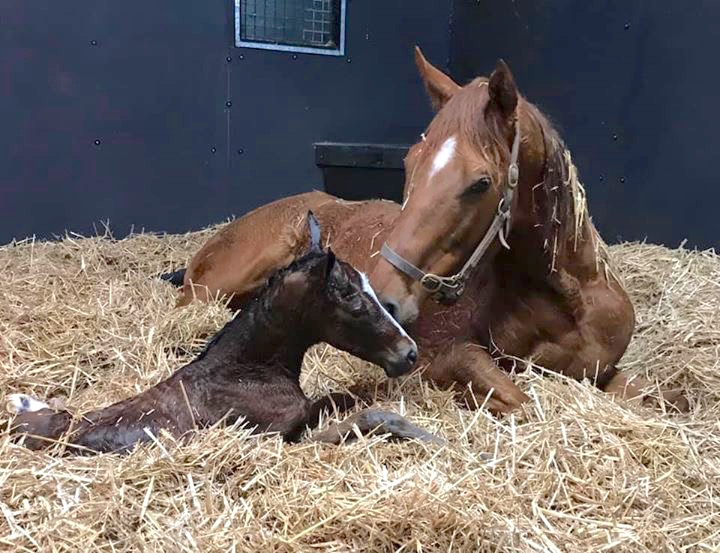 This lovely Expert Eye filly was born on February 3 at Stetchworth & Middle Park Studs in Newmarket. She's out of winning juvenile Roulette, who is a half-sister to G1 winning 2-year-old and Classic-placed Pretty Pollyanna. Photo: Juddmonte Farms