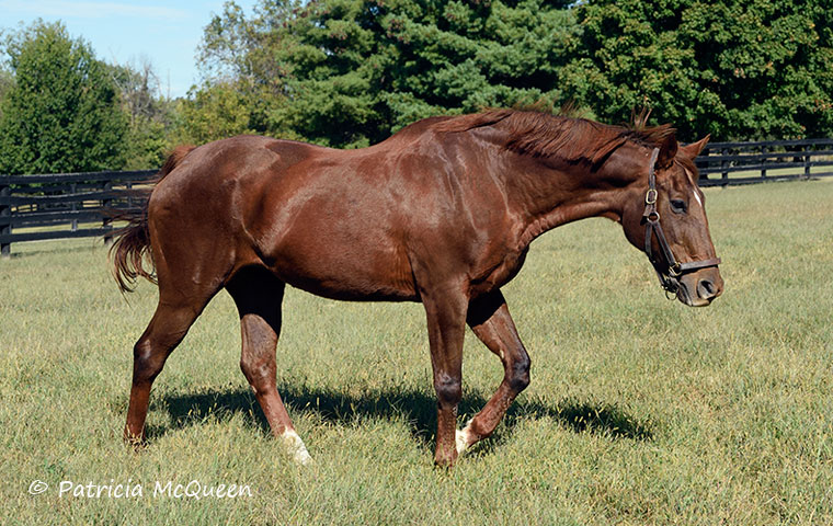 Ball Chairman: Born March 18, 1988, she is the oldest surviving known offspring of Secretariat. Photo: Patricia McQueen